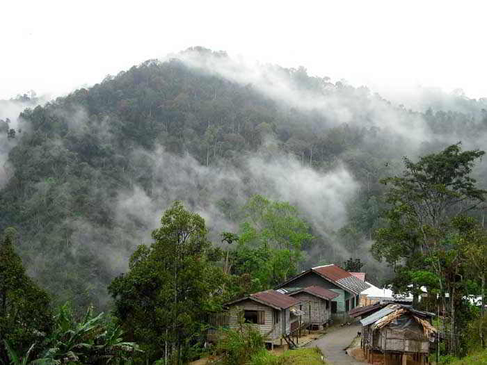 essay about cameron highlands
